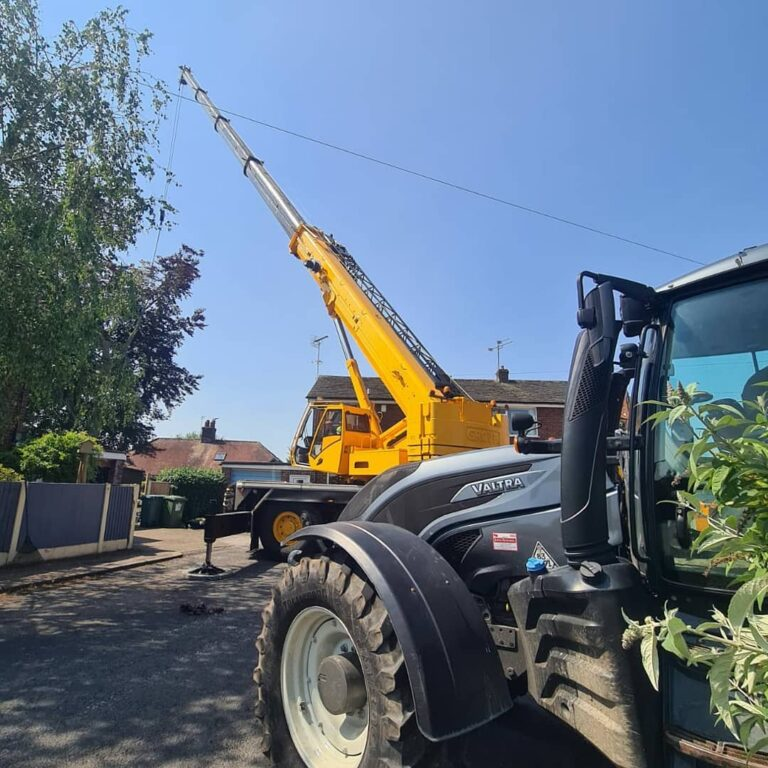 commercial tree surgeon
